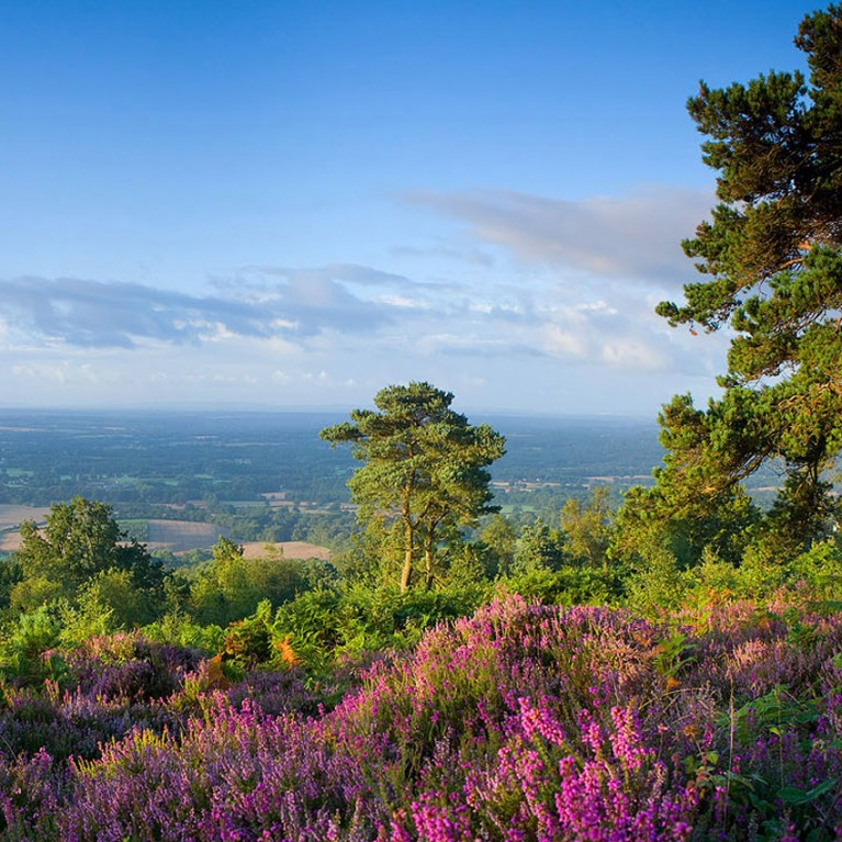 leith hill heather