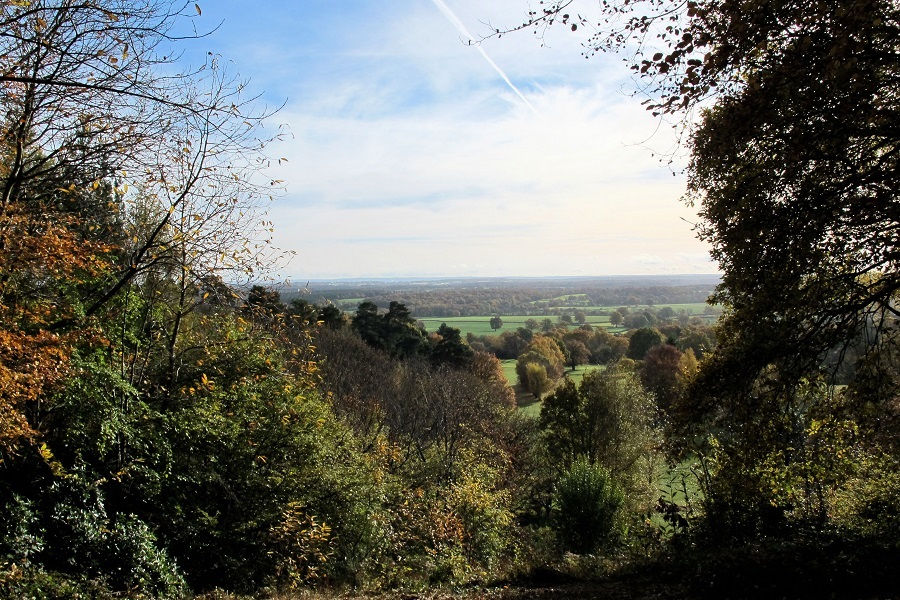 Views from the Deepdene Trail by Denise Furlonger