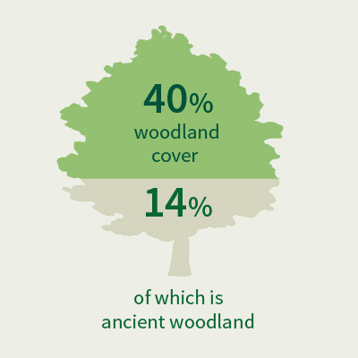 Woodland graphic