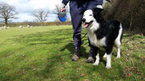The Countryside Code: keep dogs on leads